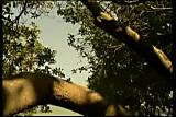 Sydnee Steele  - Hot Copy - By Dutchman15