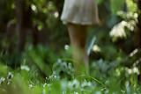 Outdoor series-Wildflowers part  1